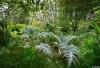 Dimanches au Jardin-Forêt
